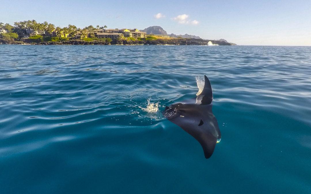 Kauai Photo Challenge – Week 12