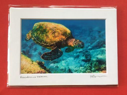 Rainbow Honu - Hawaii Ocean Photography