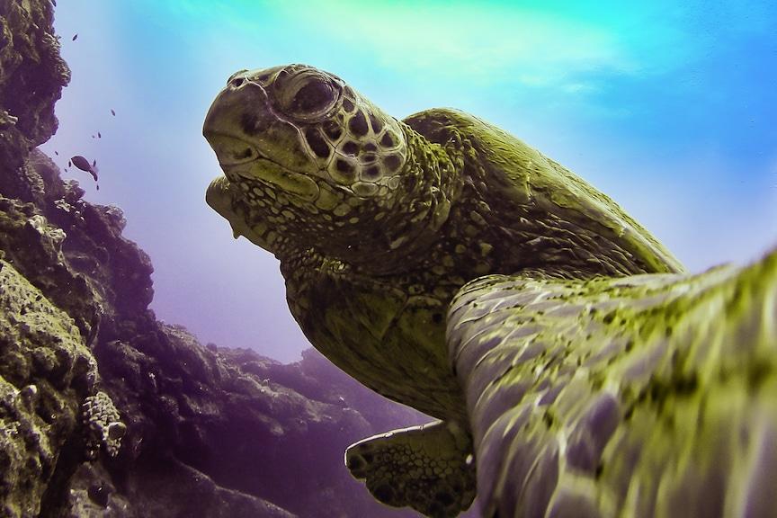 Celebrate World Turtle Day 2017