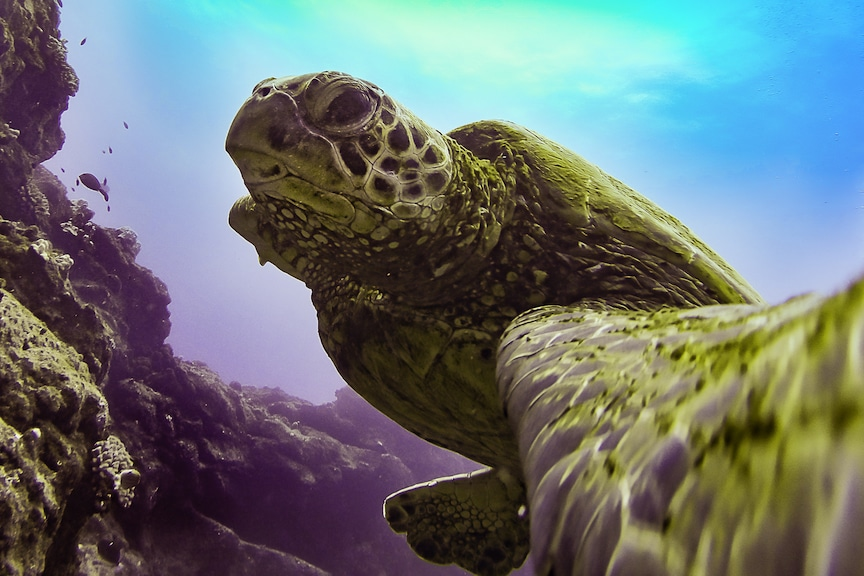 Kauai Photo Challenge – Week 19