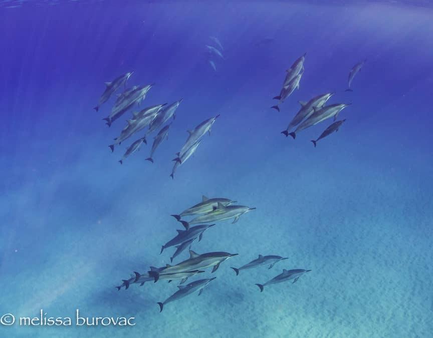 Kauai Photo Challenge – Week 15