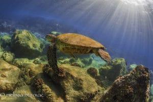 Glide - Hawaii Ocean Photography