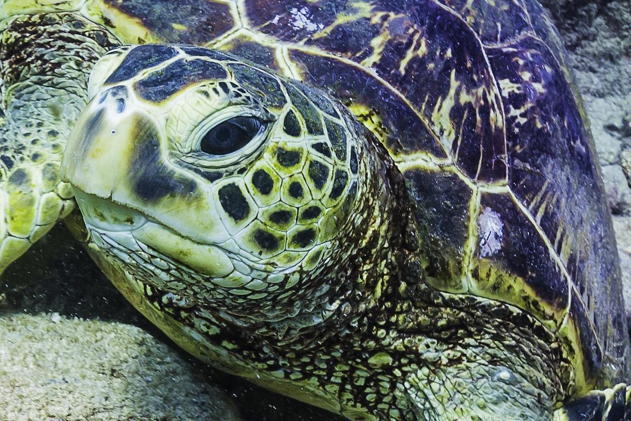 Turtle Vision