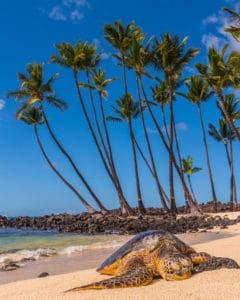 Sleeping Honu - Hawaii Ocean Photography