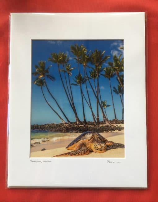 Sleeping Turtle - Hawaii Ocean Photography