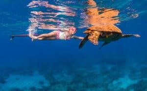 Underwater Wildlife Photo - Hawaii Ocean Photography