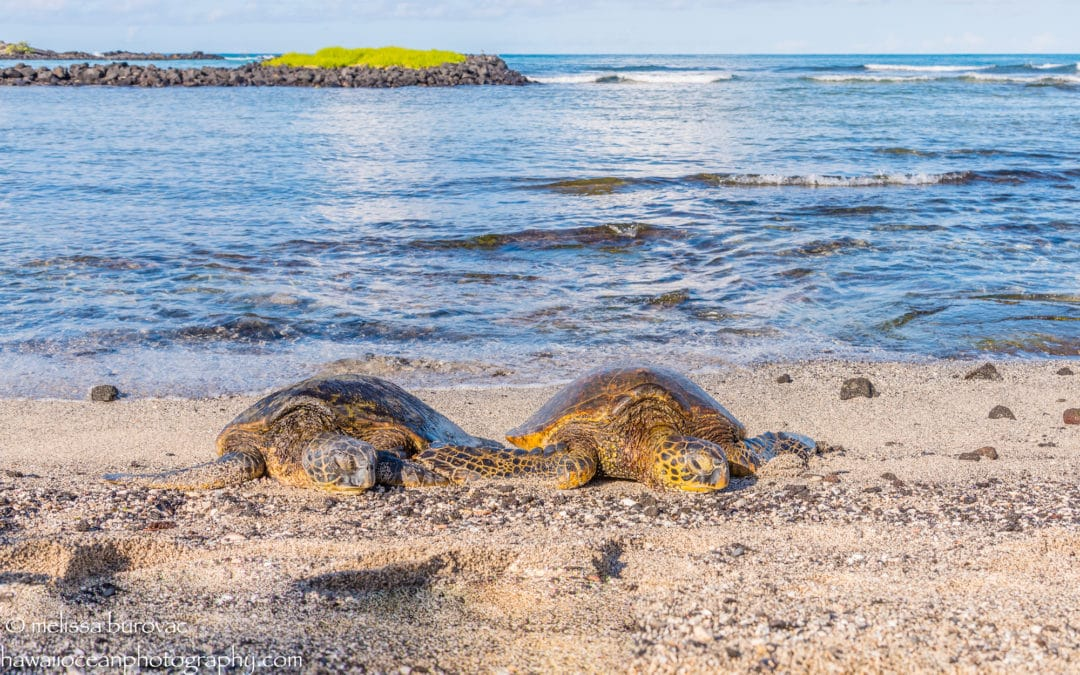 Happy Valentine's Day from Hawaii Ocean Photography
