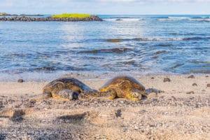 Turtle Buddies - Hawaii Ocean Photography
