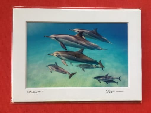 Ohana - Hawaii Ocean Photography