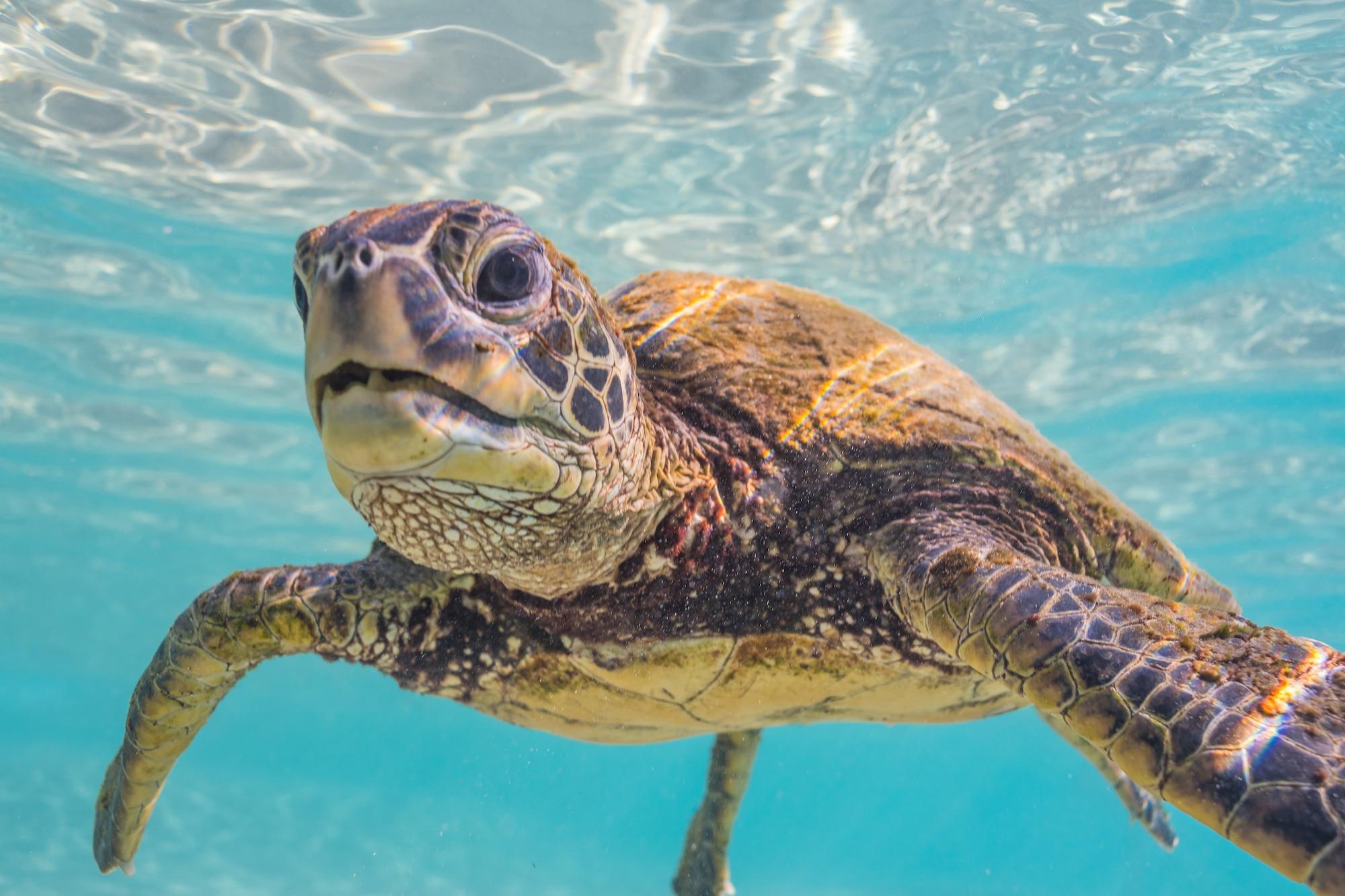 Honu rainbow sea turtle photography hawaii