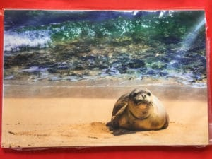 Mahaulepu Monk Seal - Hawaii Ocean Photography