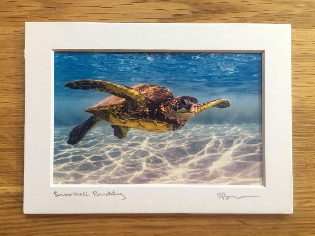 Snorkel Buddy - Hawaii Ocean Photography