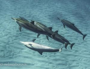 Crazy Dolphin