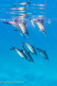Dolphin Reflections