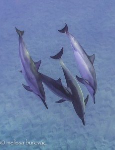 Grateful Dolphins