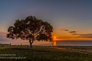 Koa Sunset