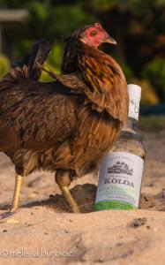 Koloa Rum 1