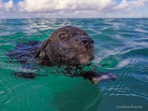 Lucy swim