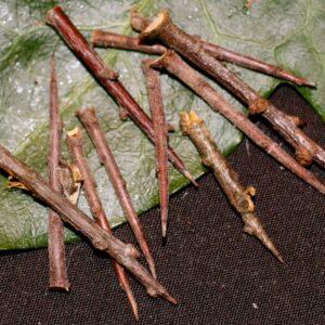 Witchcraft Thorns