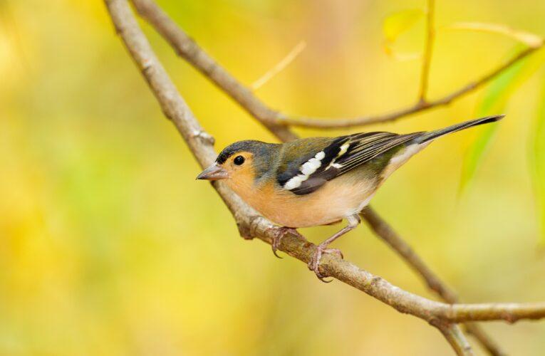 Las aves que no pudo estudiar Darwin nos ayudan ahora a entender la evolución
