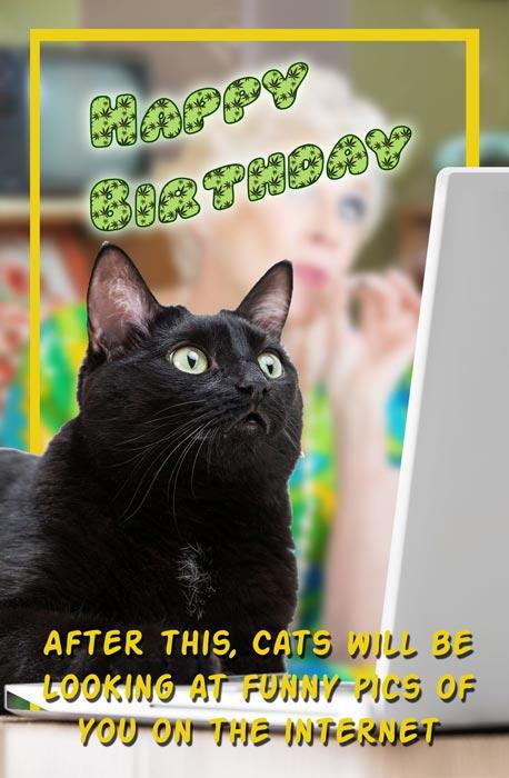 cats-full-web