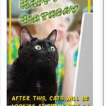 cats-web
