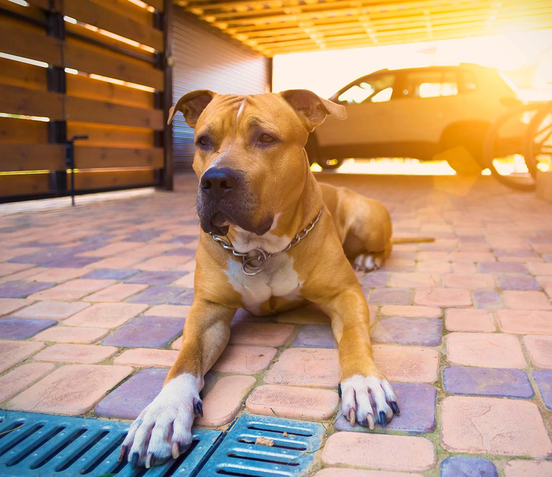 Adoption du projet de loi no 128 : pour un encadrement sévère à l'égard des chiens dangereux