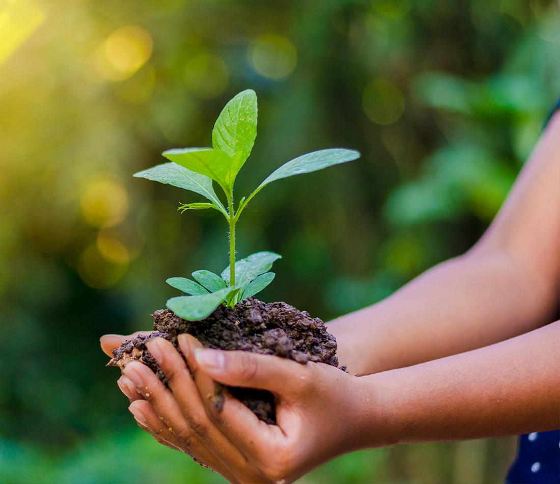 Québec lance un programme de 40 M$ pour soutenir le milieu municipal dans ses efforts de lutte contre les changements climatiques