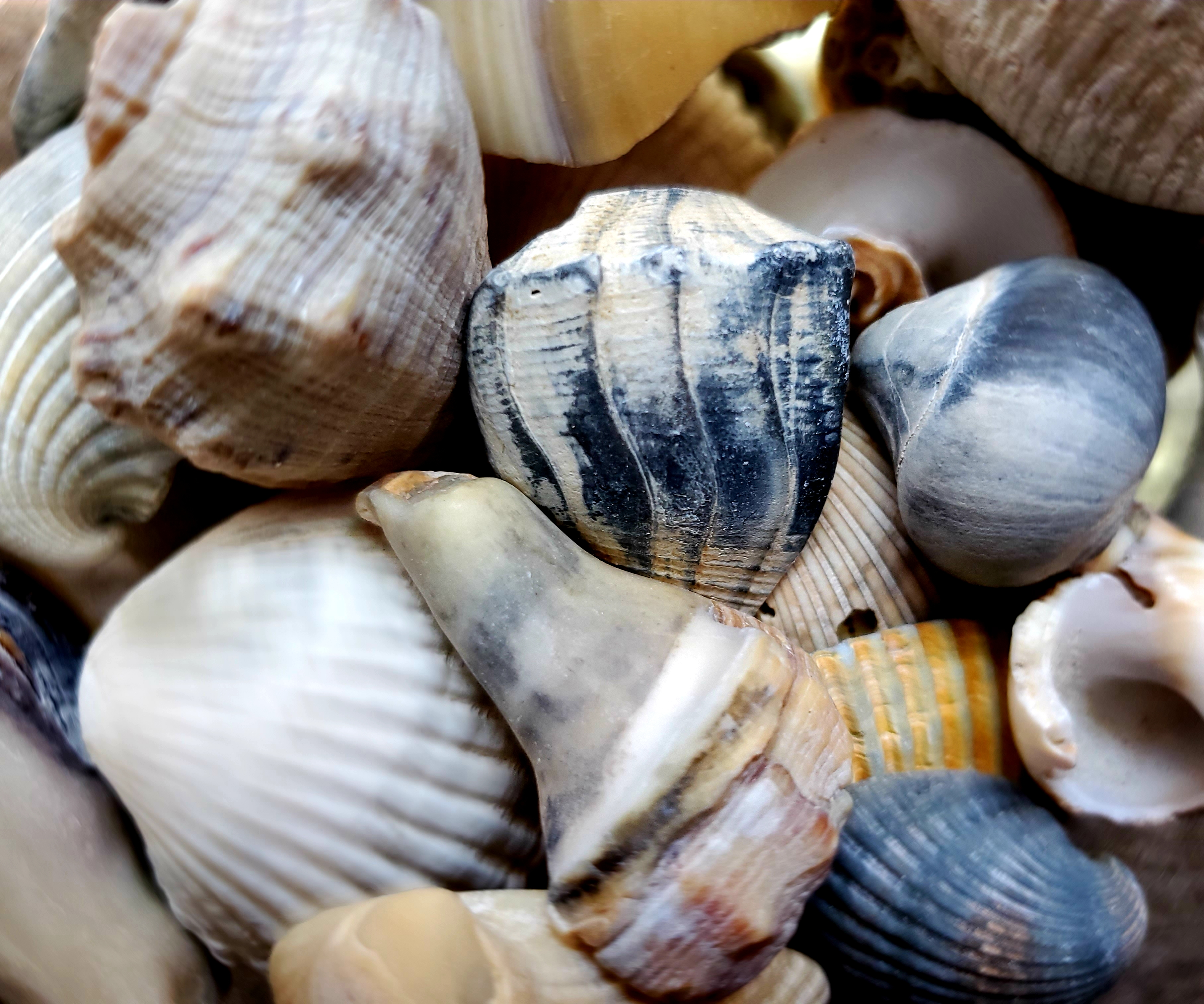 SHELLS -PART 2…SEARCHING FOR IDENTITY….
