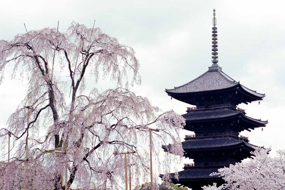 Temples and Trees