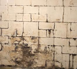 Foundation ResQ   Epoxy Wall Coatings   Mold Remediation Services
