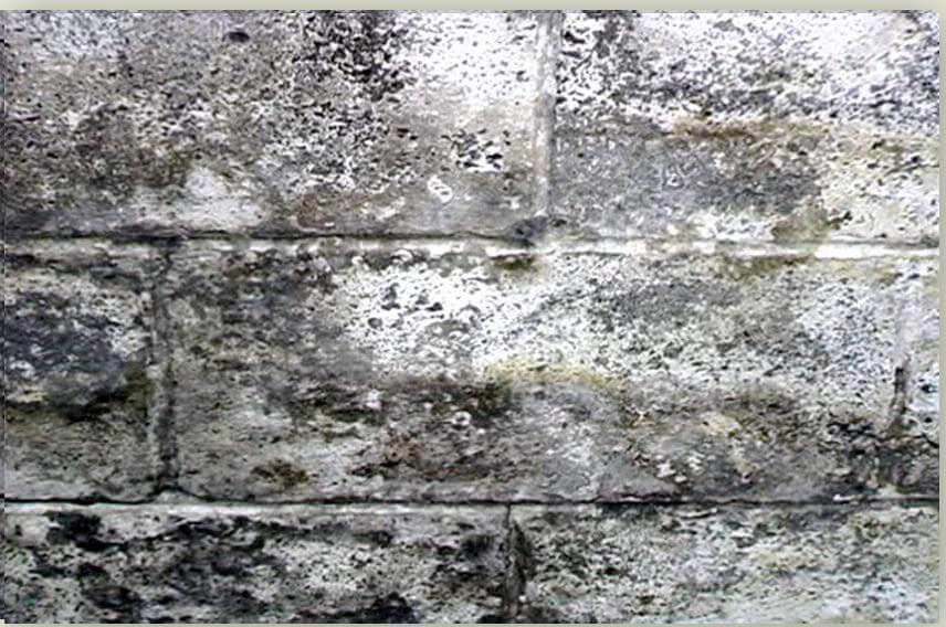 Epoxy Wall Coating | Local Waterproofing Company | Foundation RESQ