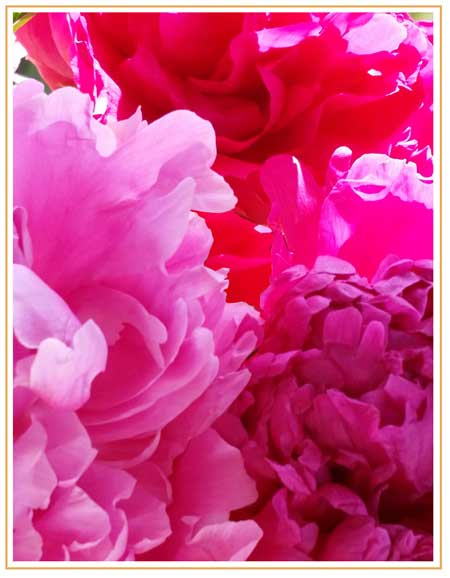 pink flowers with caramel border