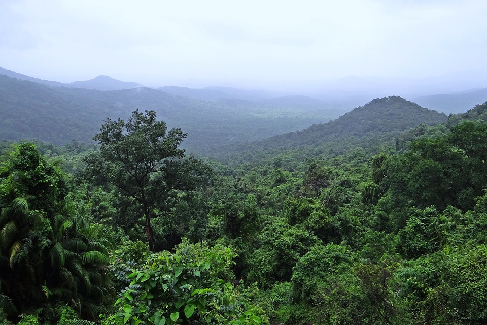 mollem rainforest