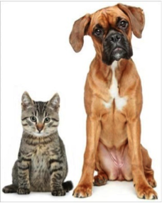 Align Yourself for Animals – NCAS Fundraiser