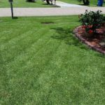 Beautiful Lawn Care in Denham Springs La. 70726
