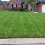 Lawn Stripes