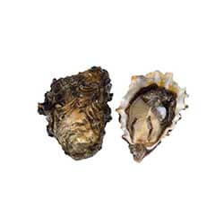 Buckle Bay Oysters