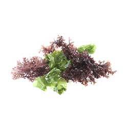 Fresh Ogo (Seaweed)