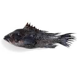 Gulf of Mexico Jumbo Black Sea Bass