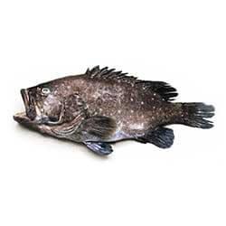 Hawaiian Sea Bass (Hapu'upu'u)