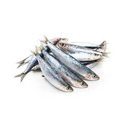 Monterey Bay Sardines