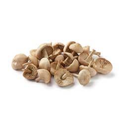 Mousseron Mushrooms