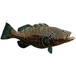 Gulf of Mexico Grouper