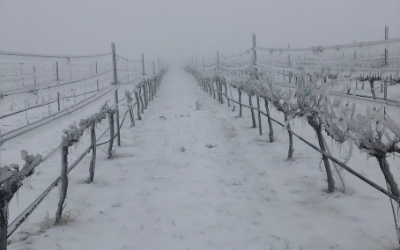 SNOW & ICE COVER TEXAS WINE COUNTRY