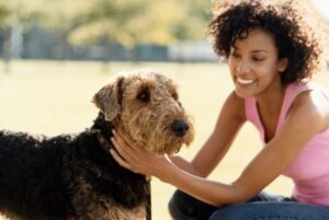 Tips for bringing your dog on vacations to a cottage