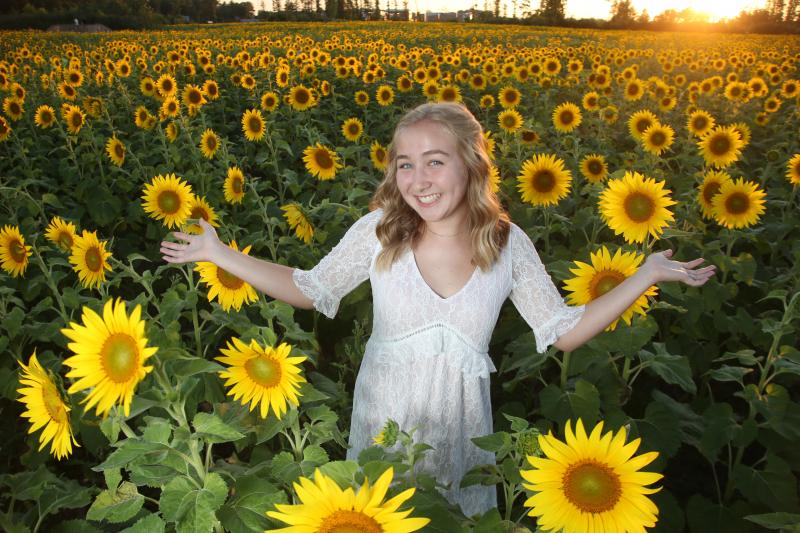 sunflowers0094