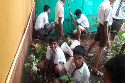 Celebration of Vanamohtsav . Tree Plantation 2019