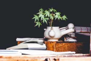 Cannabinoids - A Guide For Growers