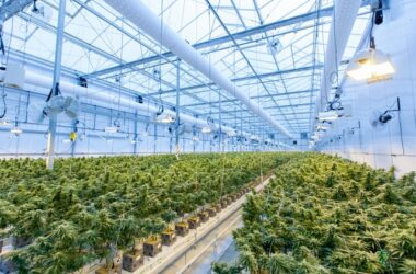 Most Effective Cannabis Growing Technology in 2021